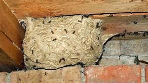 Kosten Wespennest Entfernen : wespennest entfernen muss mieter oder vermieter f r die kosten aufkommen wohnen ~ Watch28wear.com Haus und Dekorationen