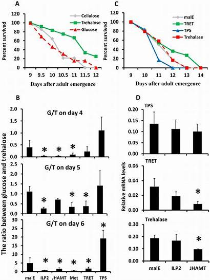 Trehalose Metabolism Role Extending Span Plays Important