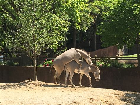 st louis zoo    urban contentment