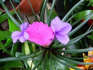 Plante Fleurie Intérieur : plante fleurie d int rieur page 3 paris c t jardin ~ Premium-room.com Idées de Décoration