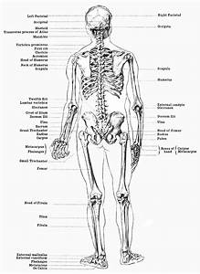 Careers  Chiropractor Orthopedic In Specific  They Specia