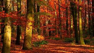 Autumn, Wood, Leaves, Trees, Red, Gleams, Hd, Nature, Wallpapers