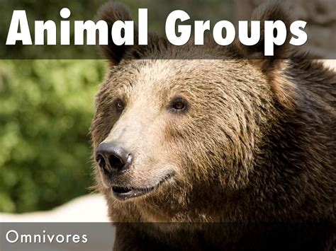 omnivores haikudeck animal five