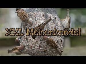Futterglocke Selber Machen : meisenkn del selber machen vogelfutter v gel f tter doovi ~ Frokenaadalensverden.com Haus und Dekorationen