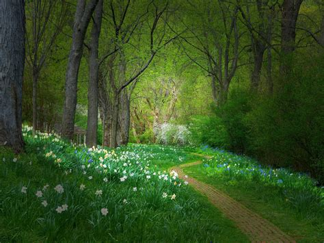 path  hd wallpapers images backgrounds