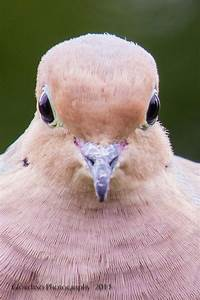 """2554 best images about Birds """"a little birdie told me ..."""