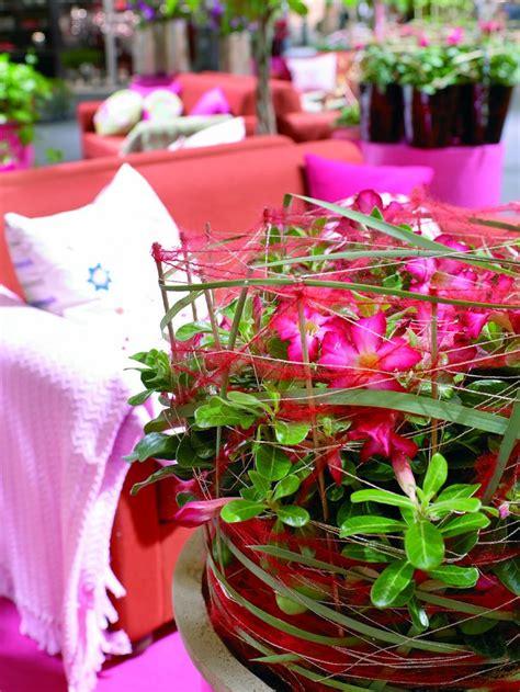 images  plants zimmerpflanzen feng shui