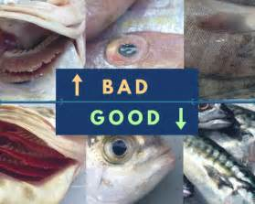 safe  eat seafood  thailand  guide  raw