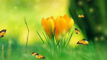 Spring Screensaver Charm Windows Backgrounds Flowers Screenshots