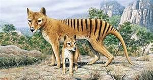 babies and beautiful baby thylacine