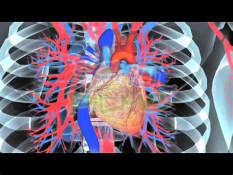 film dvd biologie herz und blutkreislauf beim menschen