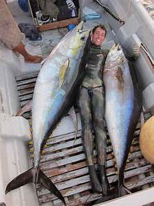 Yellowfin Tuna Record | www.pixshark.com - Images ...