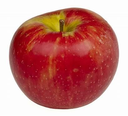 Honeycrisp Wikipedia Apple Wiki