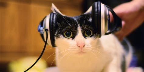 cat listening  facebook  hope animal rescue