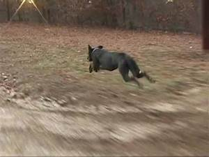 Kph To Mph : great dane running fast at 30 mph 48 kph with slow motion section youtube ~ Maxctalentgroup.com Avis de Voitures