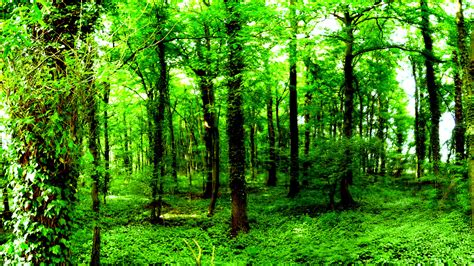 Green Forest Image by Forest Wallpaper Hd Pixelstalk Net