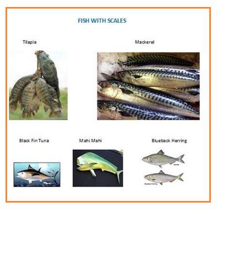 scales fish fins mahi grouper haddock flounder mackerel albacore ikan halibut