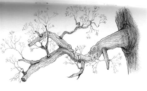 tree drawing  branches tree drawing  branches