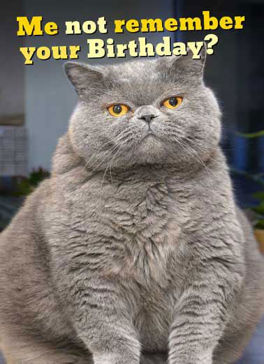 birthday cards funny animals cards  postage included