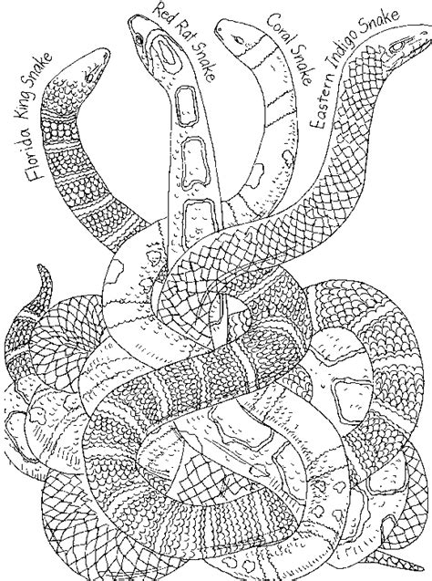 snake coloring pages bestofcoloringcom