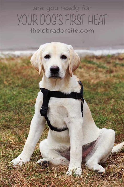 long   dog stay  heat expert guide  faq