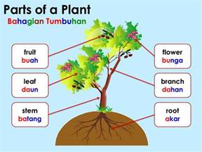Different Parts of a Plant for Kids