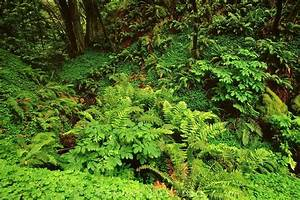 North American Forest Undergrowth