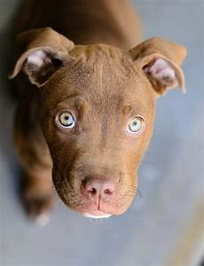 16 Dogs with Eyes That Nobody Can Resist. Just Try It ...