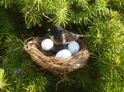 birds nest pics bird nest geocache container geocache hides
