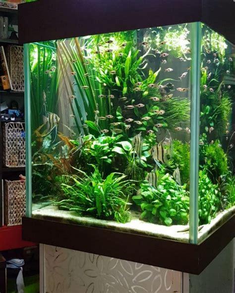 Home Aquarium Design Ideas by 21 Best Aquascaping Design Ideas To Decor Your Aquarium