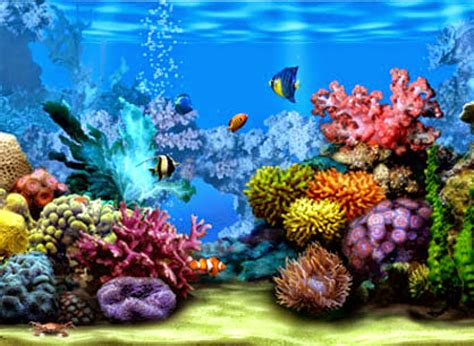 Animated Coral Reef Wallpaper - coral reef hd wallpapers earth