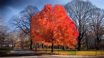 Fall Arbre Qui Feuilles Ses Tree Perd