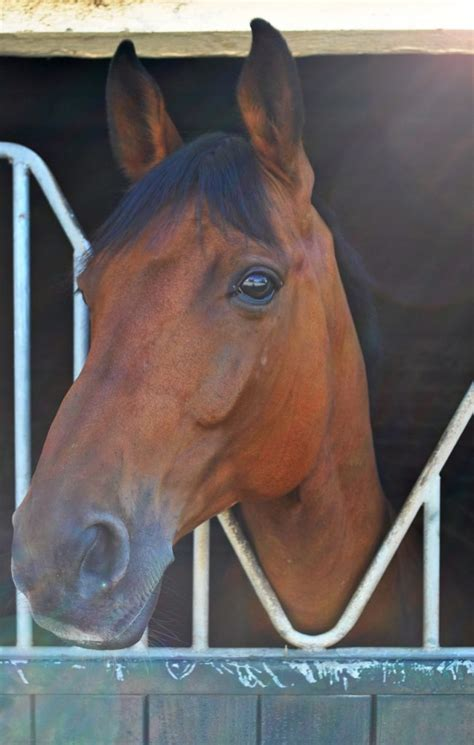 magengeschwuer pferd pferdesachen