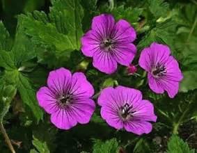 Hardy Perennial Shade Flowers