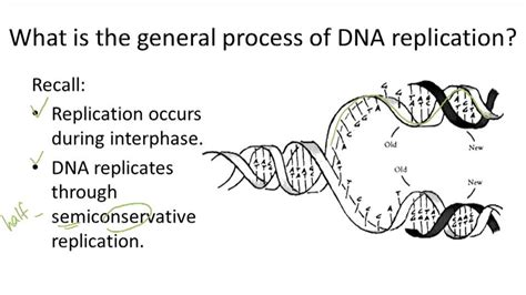 Dna Structure And Replication  Ck12 Foundation