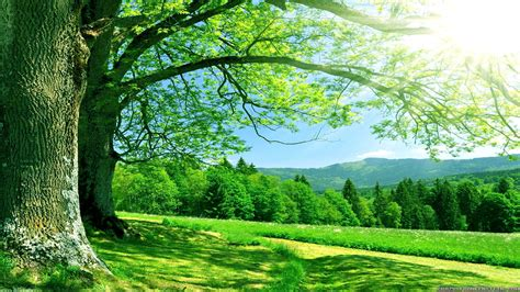 Summer Nature Wallpapers by Summer Nature Wallpaper 183 Wallpapertag