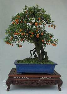 Kiwi Tree Bonsai | www.pixshark.com - Images Galleries ...