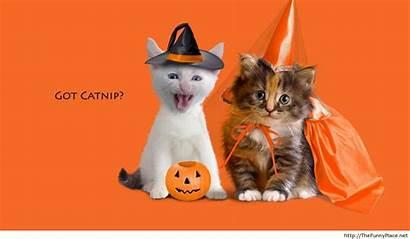 Halloween Cats Cat Funny Happy Desktop Animals
