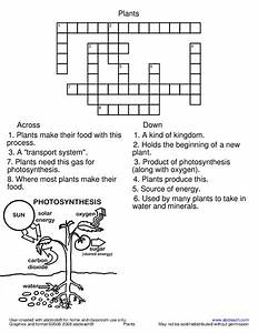 Photosynthesis Worksheet For 6th