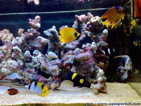 choix entre fo et r 233 cifal manuel aquarium marin r 233 cifal