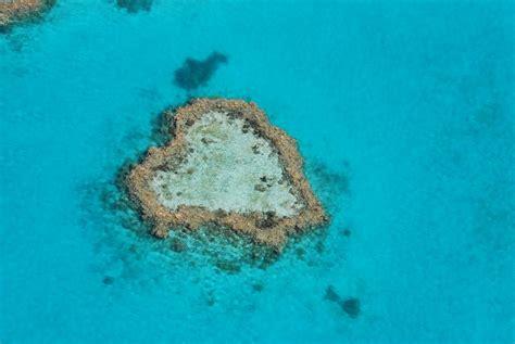 top diving reefs   great barrier reef