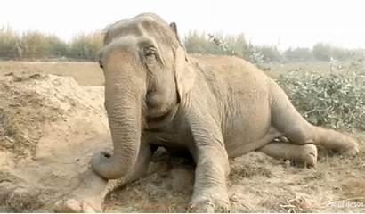 Wildlife Enjoying Elephant Caught Rescued Performer Circus