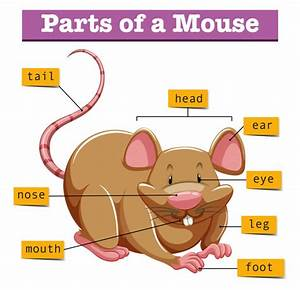 Diagram Showing Parts Of Mouse Vector