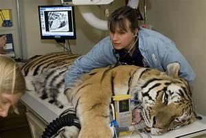 Zoological Veterinary Technician Veterinary Technician