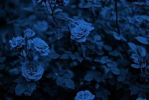 royal blue flower | Tumblr