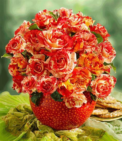 Malerrose® 'alfred Sisley®' 1arosenpflanzen Bestellen