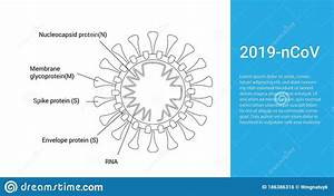 Coronavirus Structure Vector Illustration