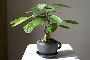 die besten 25 bonsai wald ideen auf pinterest indoor With garten planen mit bonsai growing kit
