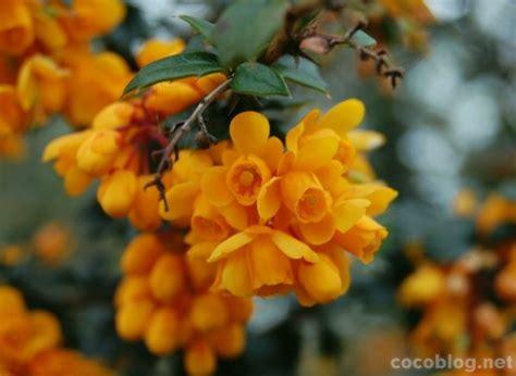 Pavasara ziedi - Cocoblog