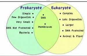 Kennedy Clan Science  Prokaryotic Vs Eukaryotic Cells